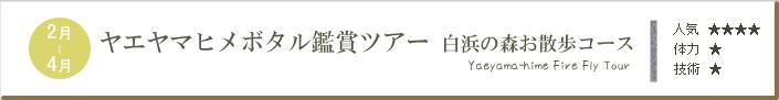 ヤエヤマヒメボタル鑑賞ツアー